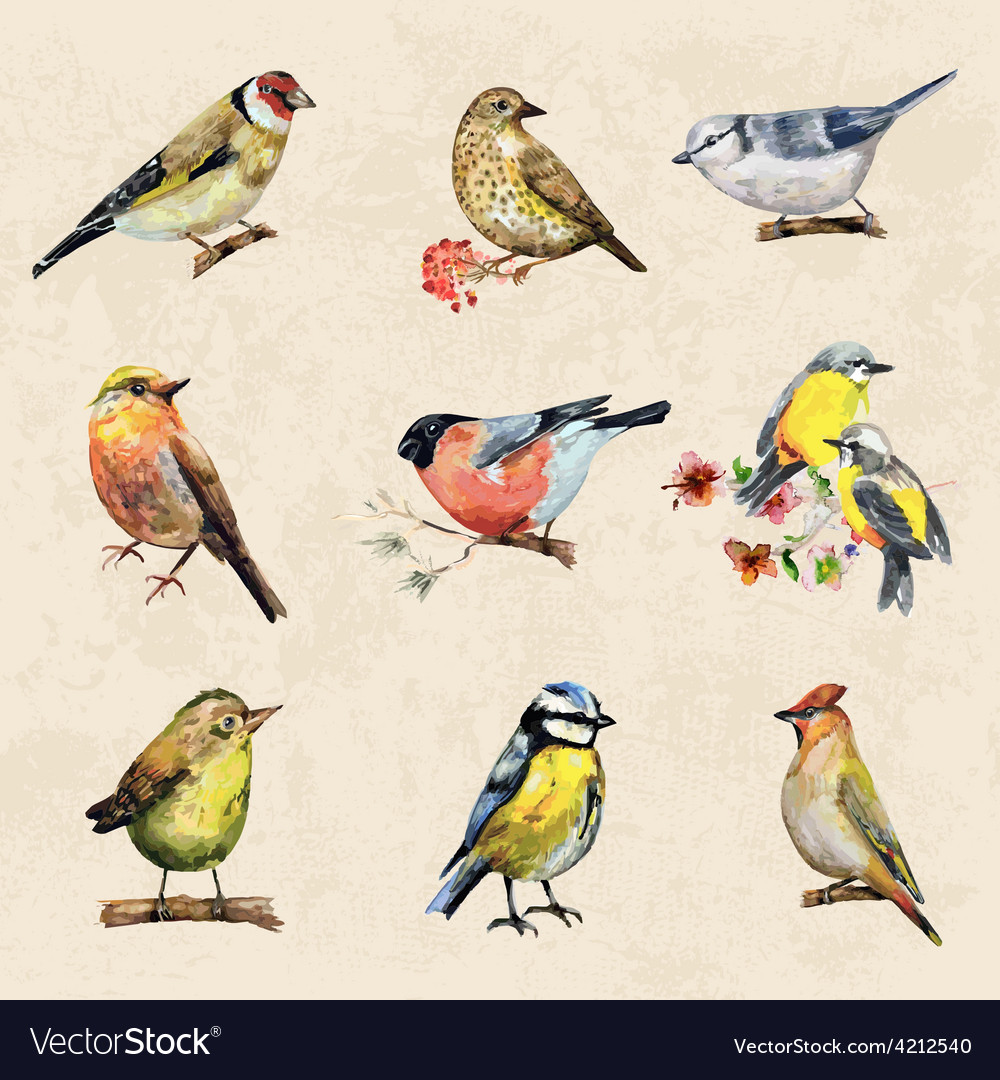 Vintage a collection of birds watercolor painting