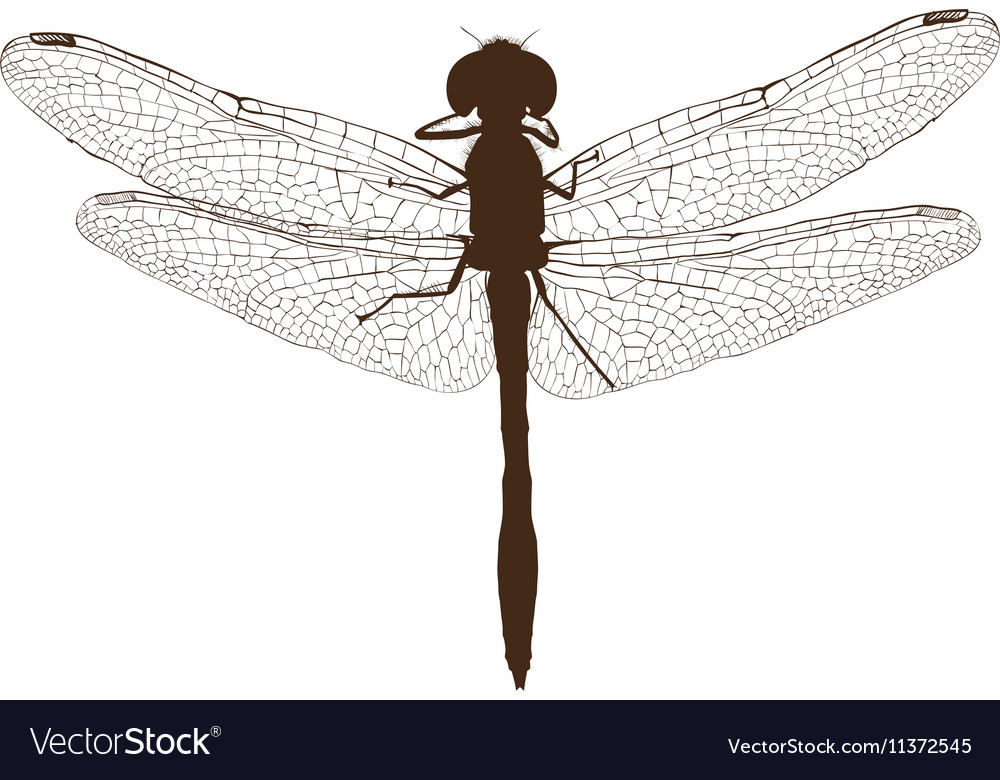 brown dragonfly silhouette top view royalty free vector
