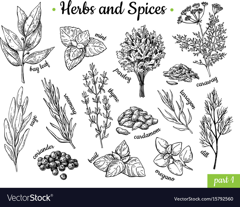 Herbs and spices hand drawn