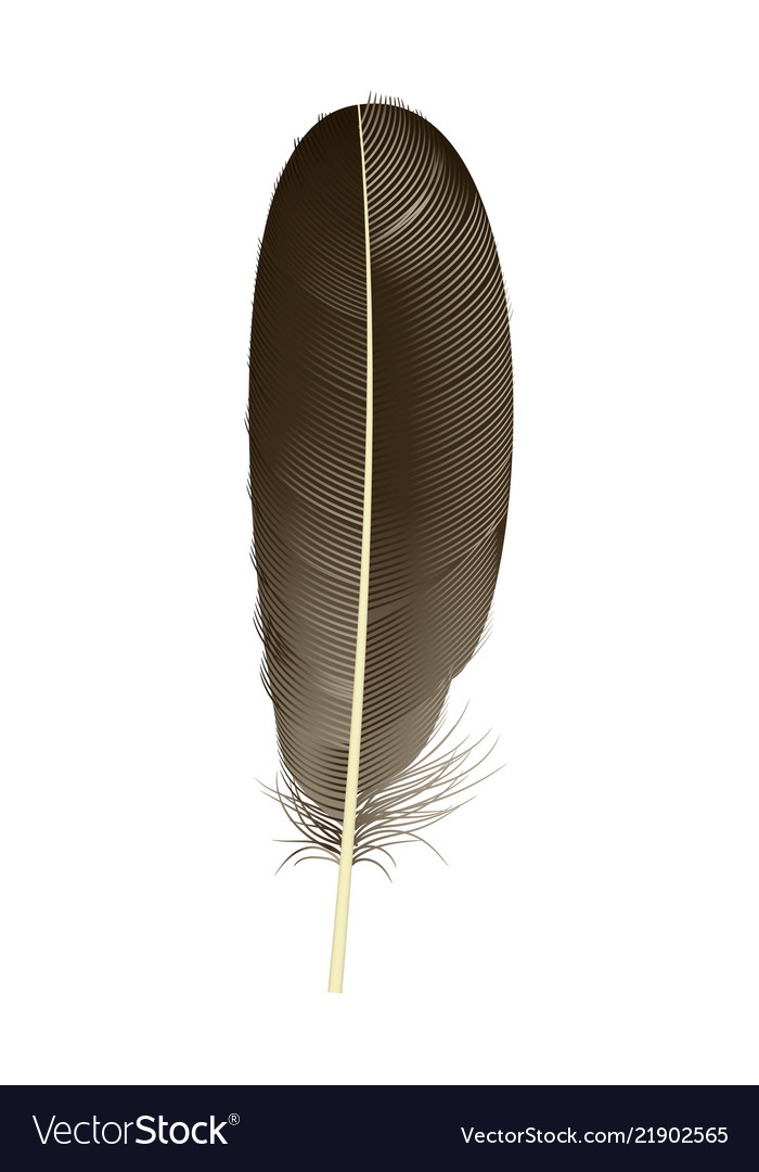 Black feather icon realistic style