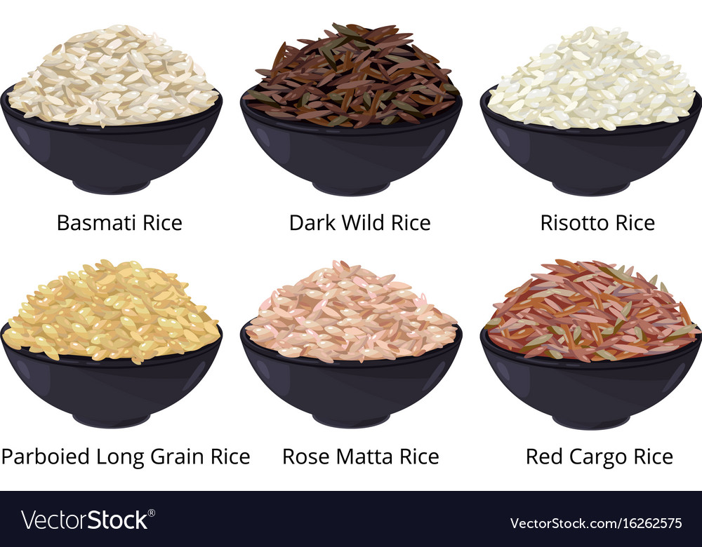 Different type of rice long grain brown white vector image