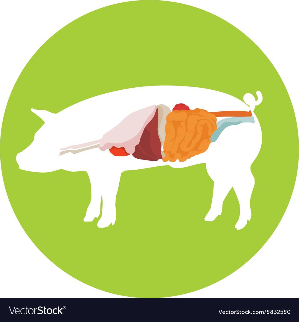Pig anatomy digestive system royalty free vector image pig anatomy digestive system vector image ccuart Choice Image