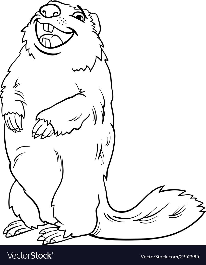 Marmot animal cartoon coloring book vector image