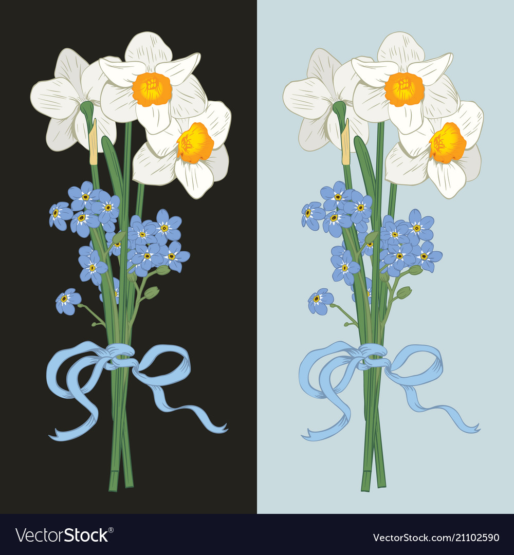 Narcisus and myosotis hand drawn bouquet on dark