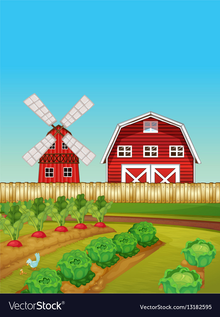Farm Scene With Vegetable Garden And Barn Vector Image