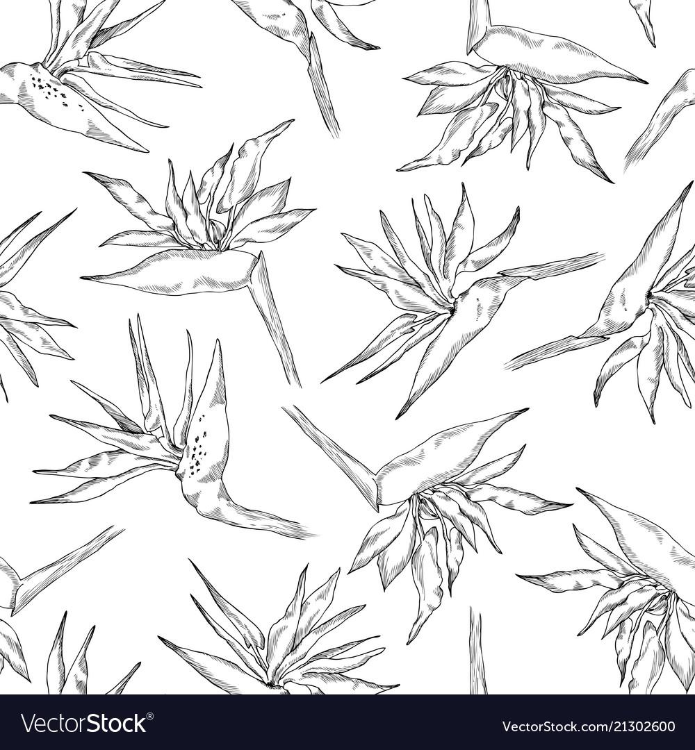 Seamless pattern linear strelitzia collection