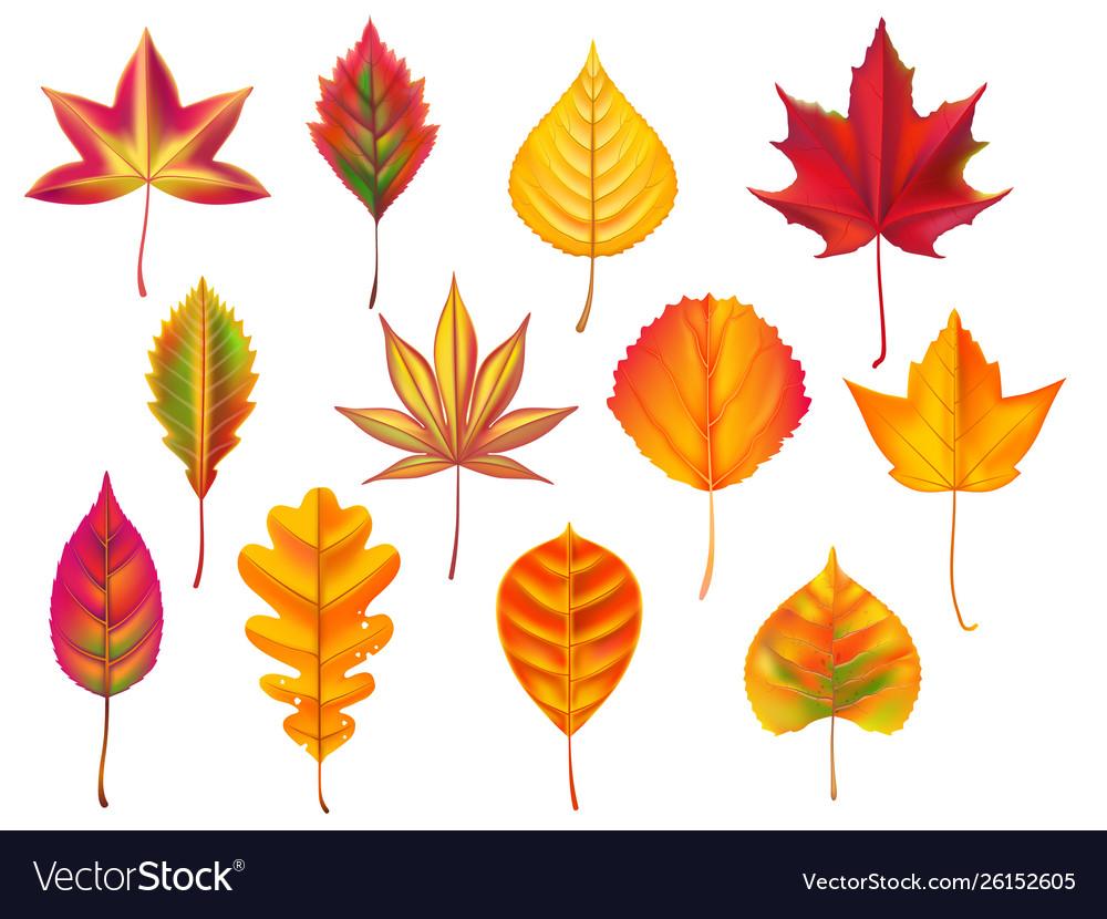 Autumn leaves fallen leaf dry fall leafy litter