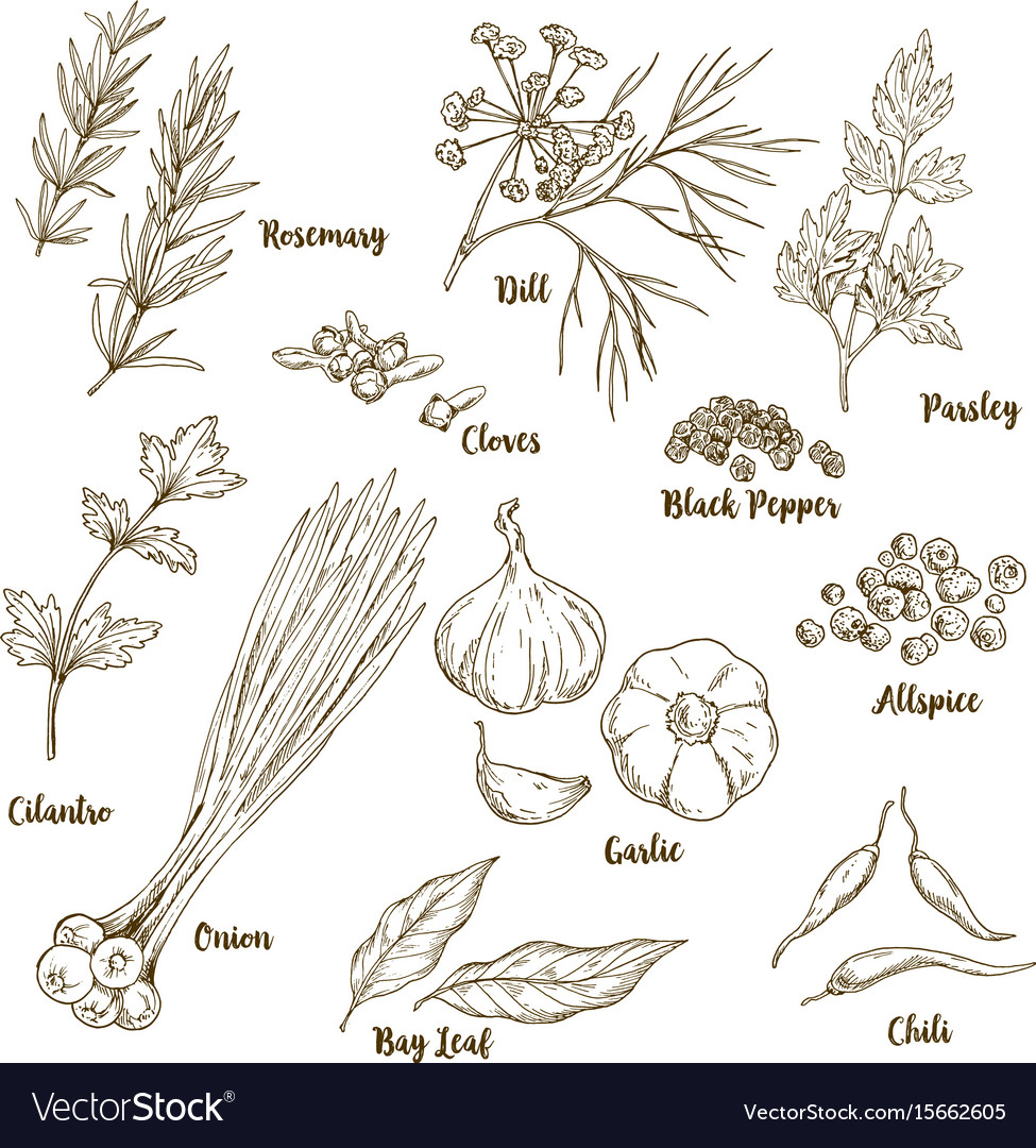 Set of hand drawn herbs and spices