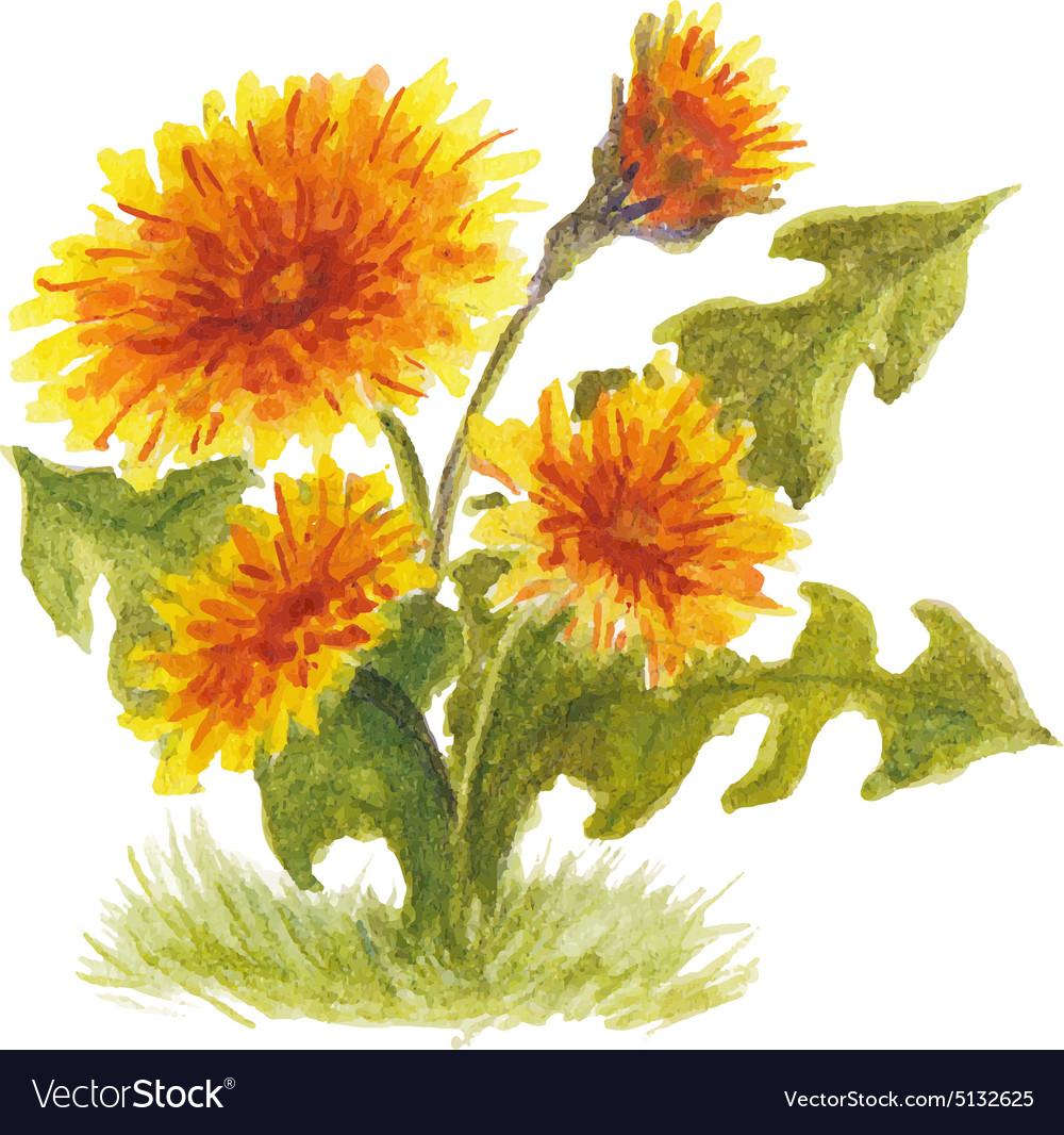 Fluffy yellow dandelion vector image