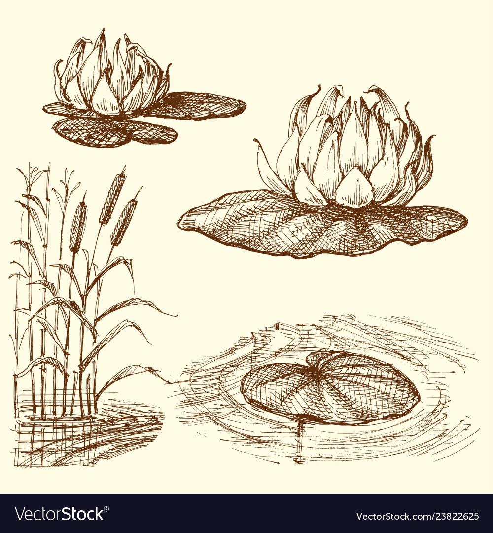 Water lily and water plants set