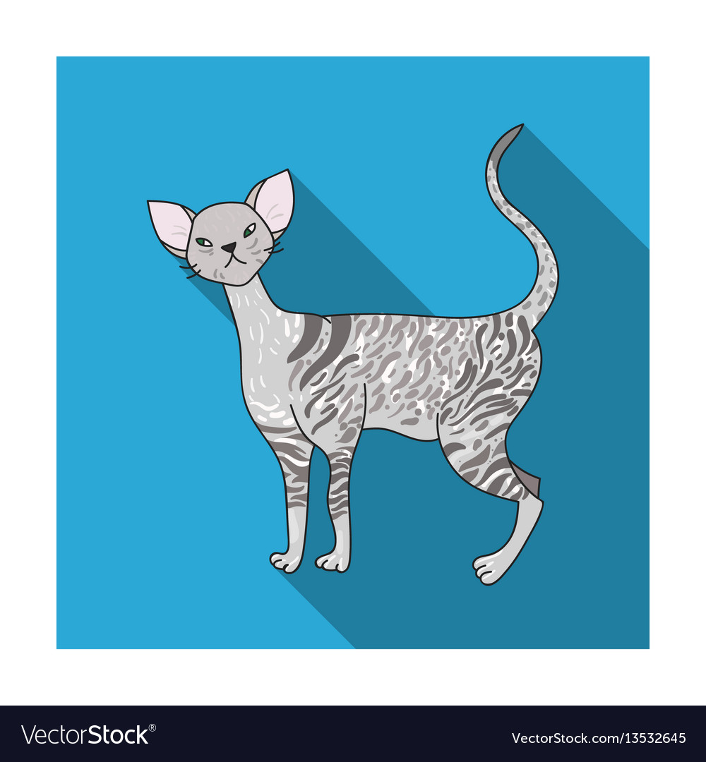 Cornish rex icon in flat style isolated on white