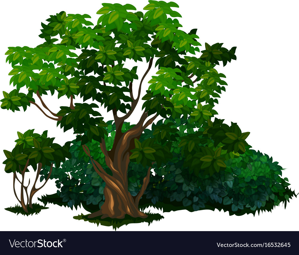 Detailed Tree In Cartoon Style Isolated Royalty Free Vector