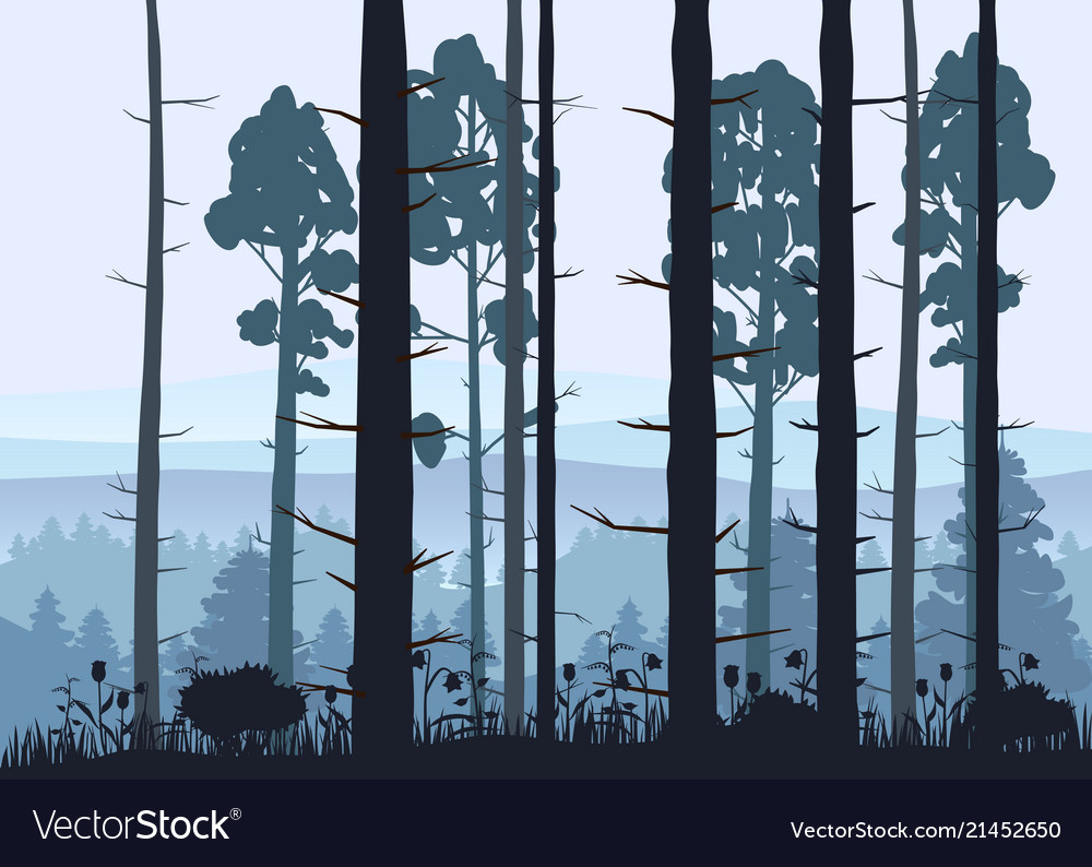 Sunny forest background of