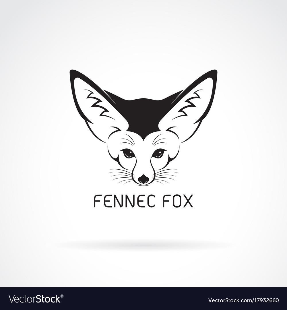 Fennec fox head on a white background wild