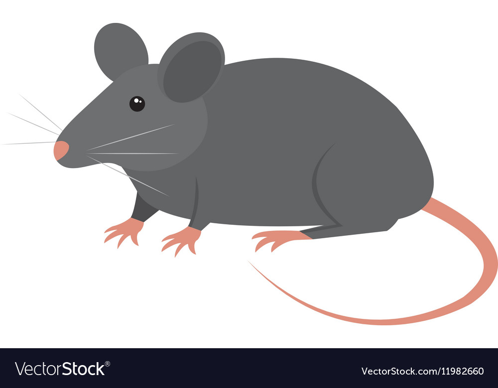 rat animal isolated icon royalty free vector image vectorstock