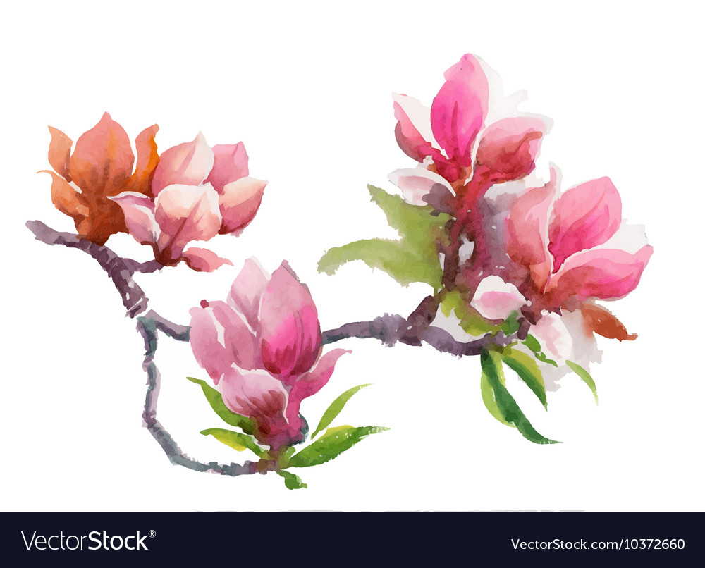 Watercolor summer blooming pink magnolia flowers vector image mightylinksfo