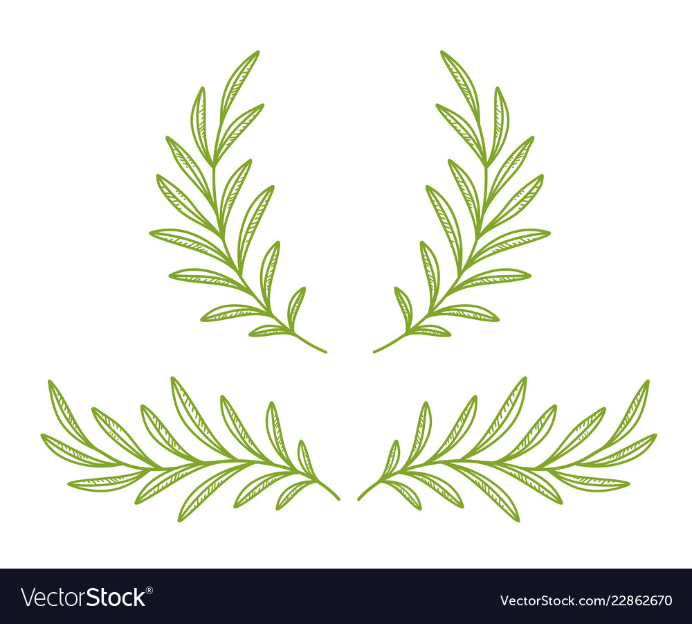 Green hand drawn olive branches and wreath