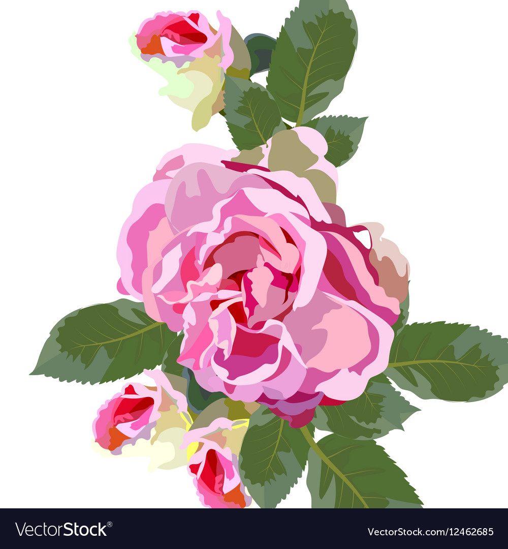 Vintage Watercolor Pink Rose flowers isolated