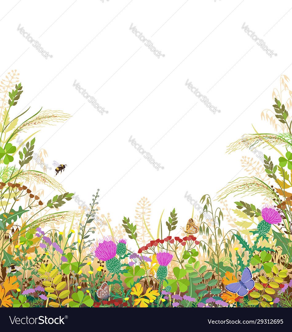 Colorful frame with autumn meadow plants and