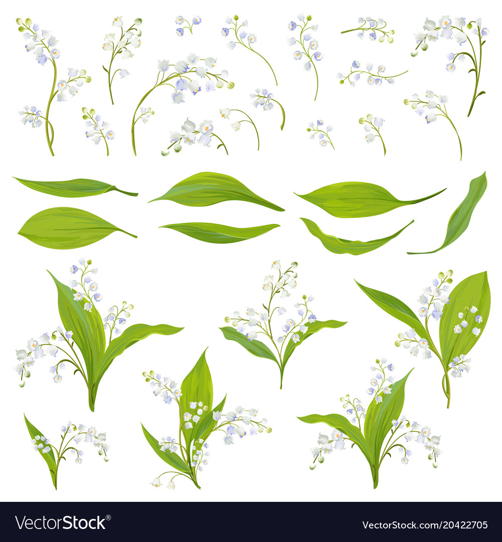 Lily Valley Hand Drawn Watercolor Flowers Leaves Vector Image