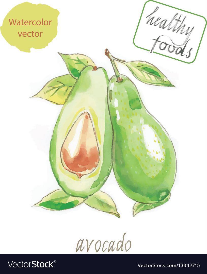 Avocado Watercolor Pictures