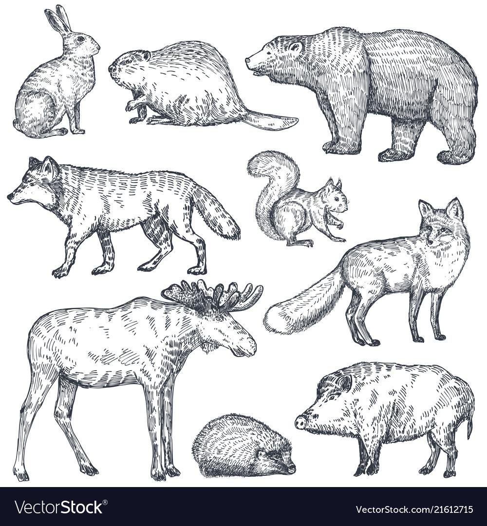 Set of hand drawn animals of europe