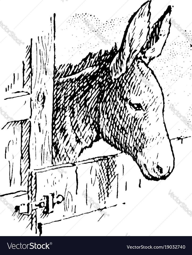 Donkey vintage
