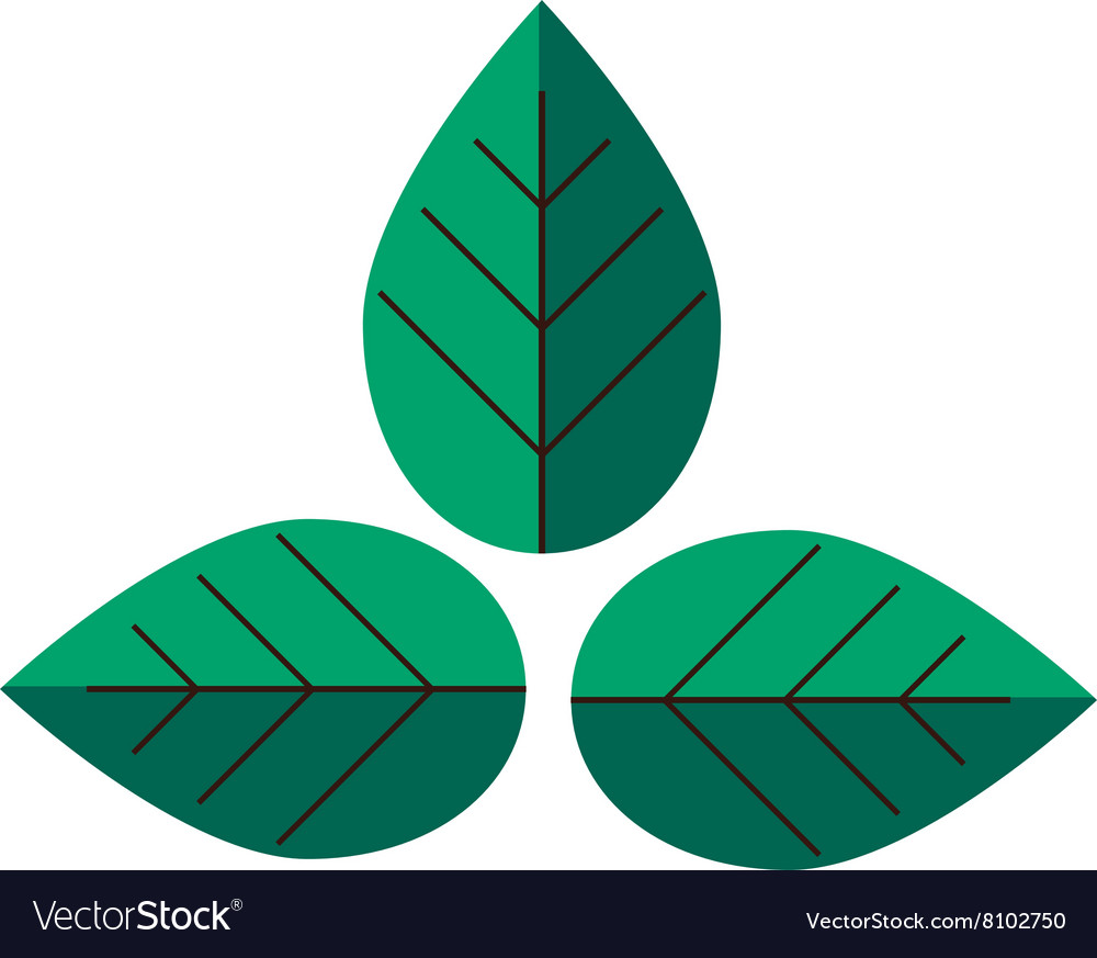 Flat leaves green plant eco