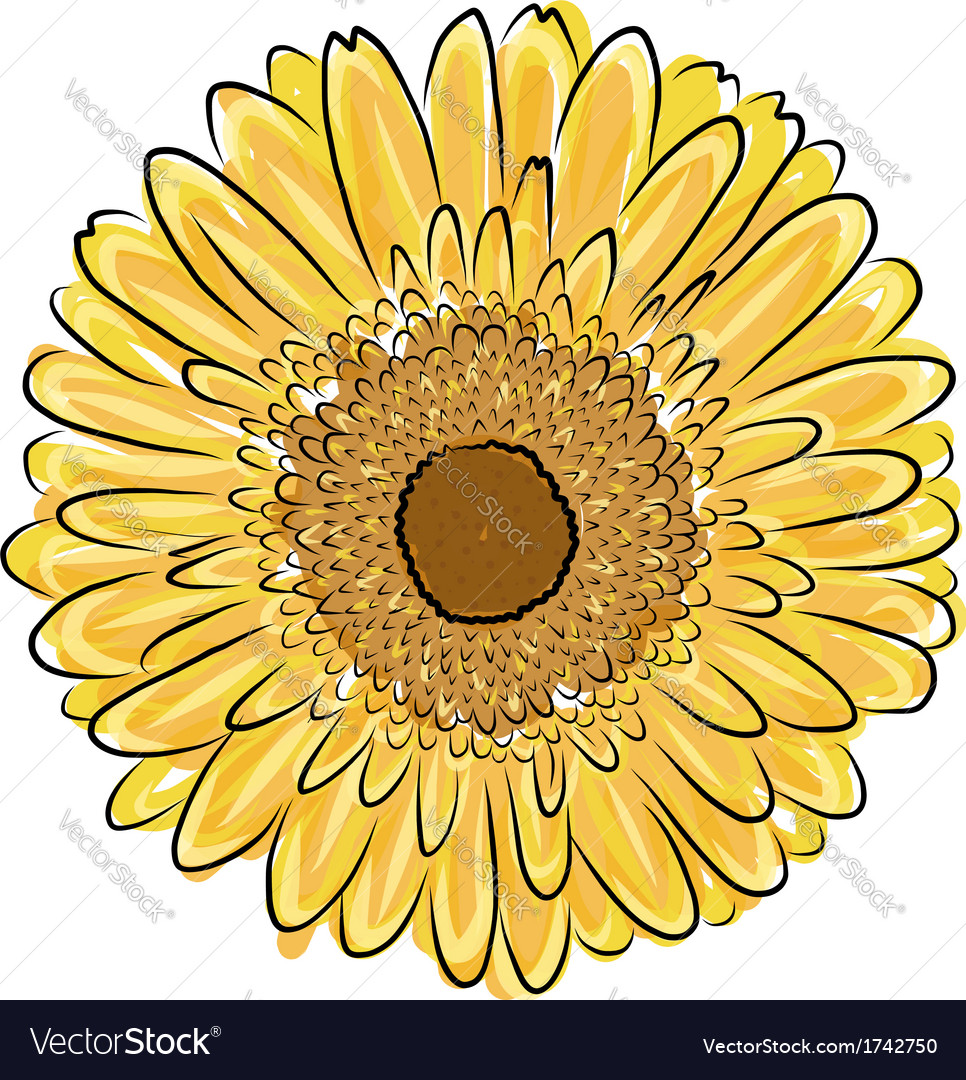 Sunflower sketch for your design