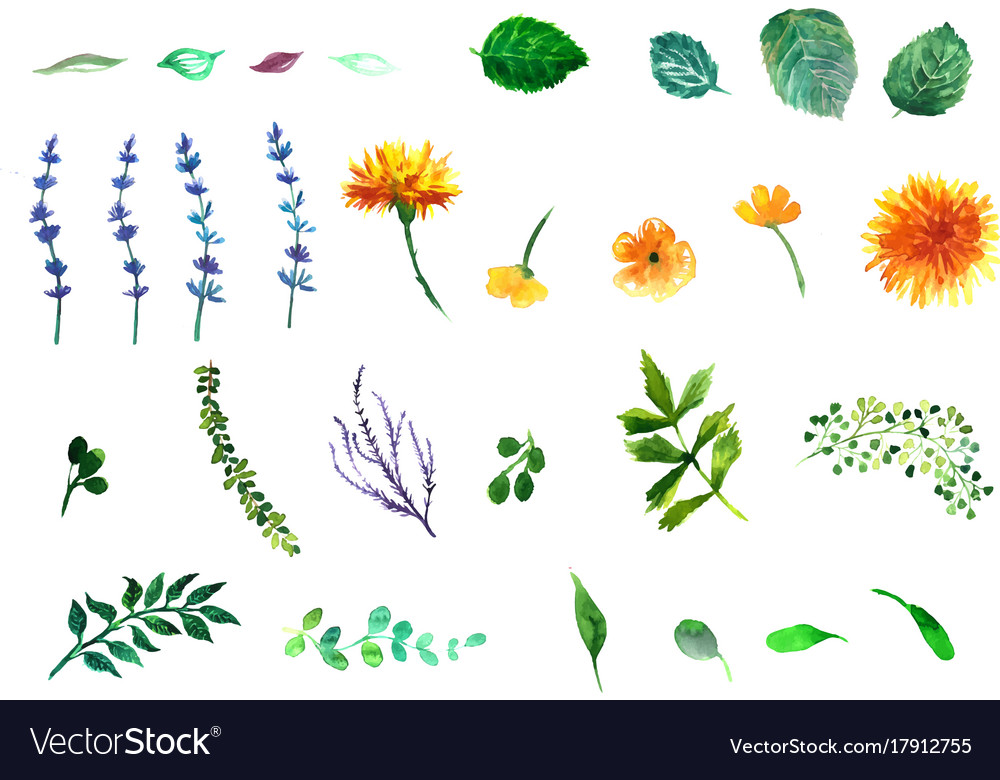 Floral set collection with leavesspring or vector image