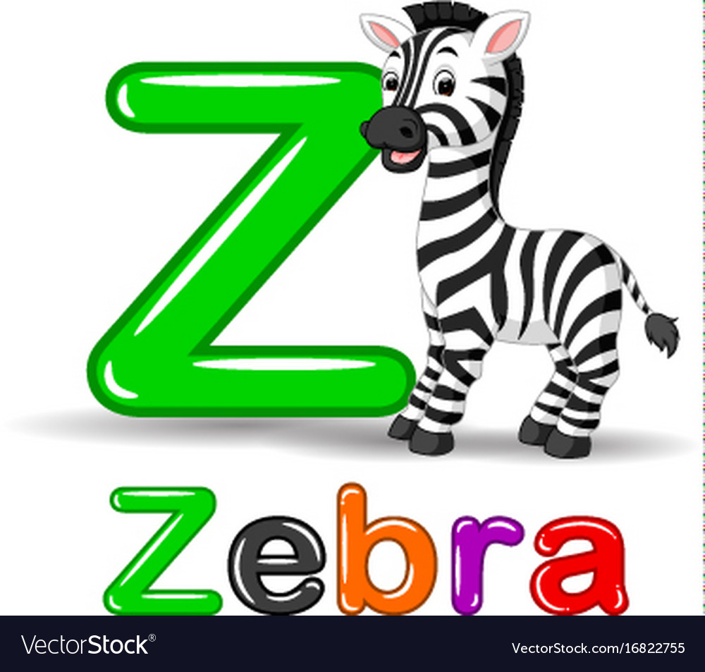 Zebra animal and letter z for kids abc education i