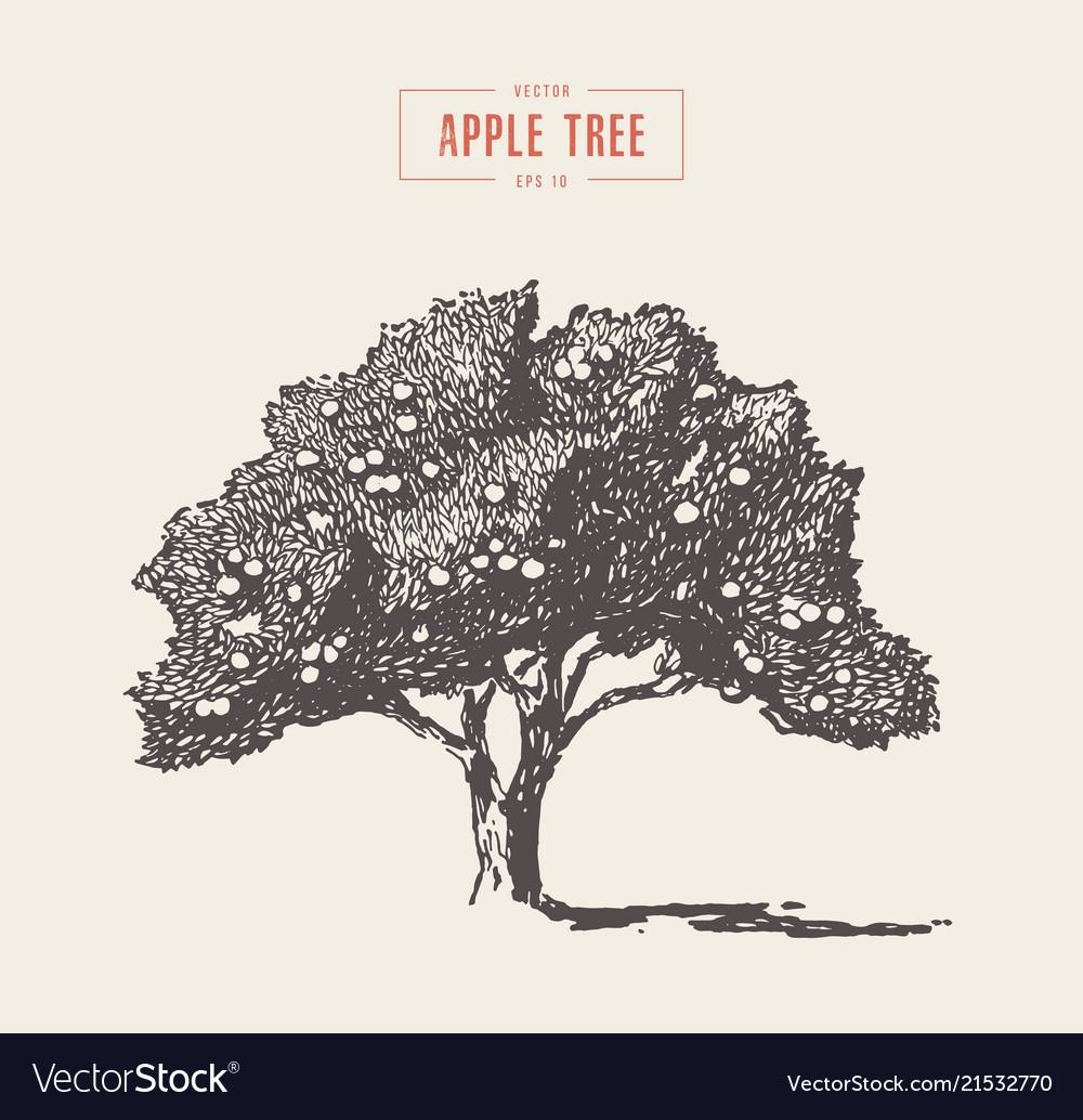 High Detail Vintage Apple Tree Drawn Royalty Free Vector