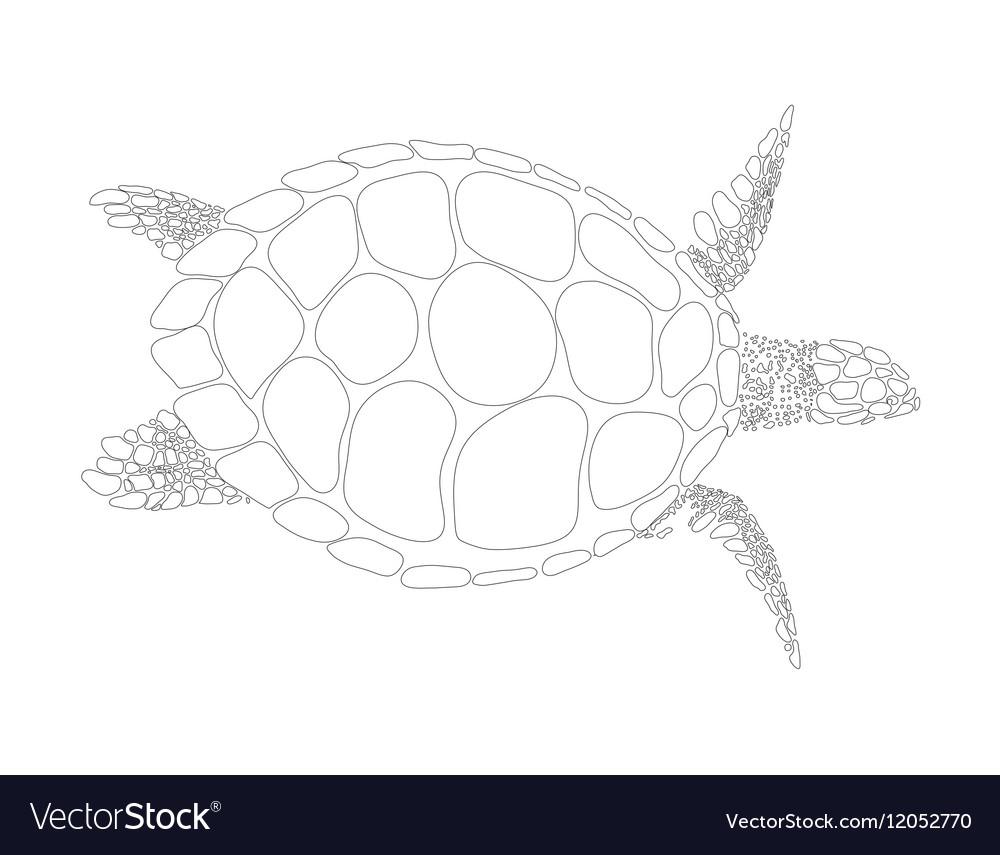 Turtle symbol vector image