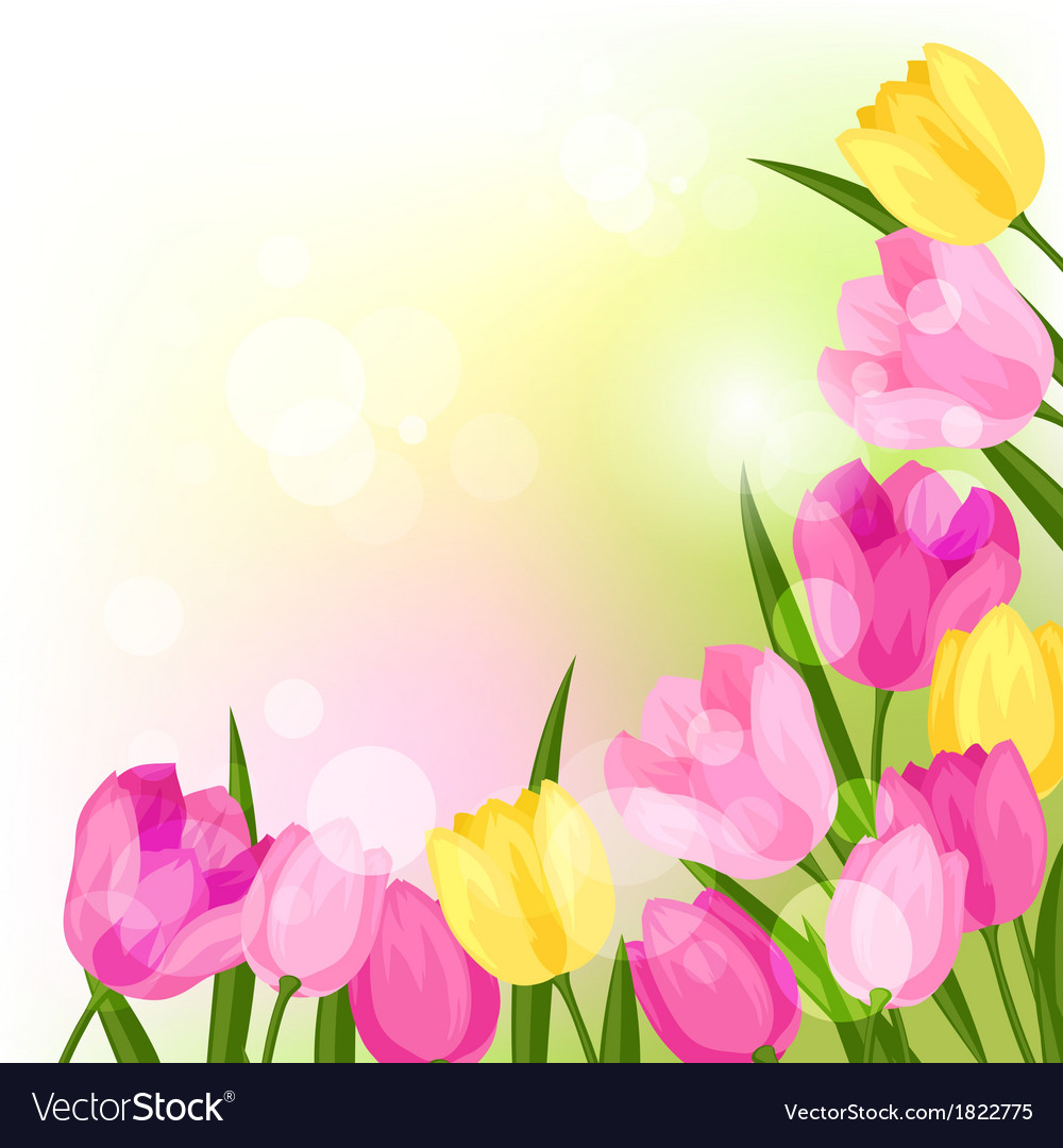 Spring flowers tulips natural background vector image mightylinksfo