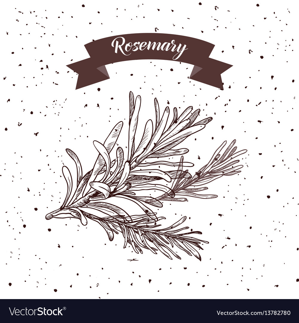 Rosemary herb and spice label engraving