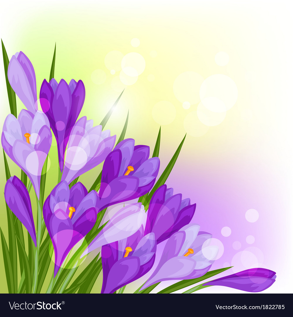 Spring flowers crocus natural background vector image mightylinksfo