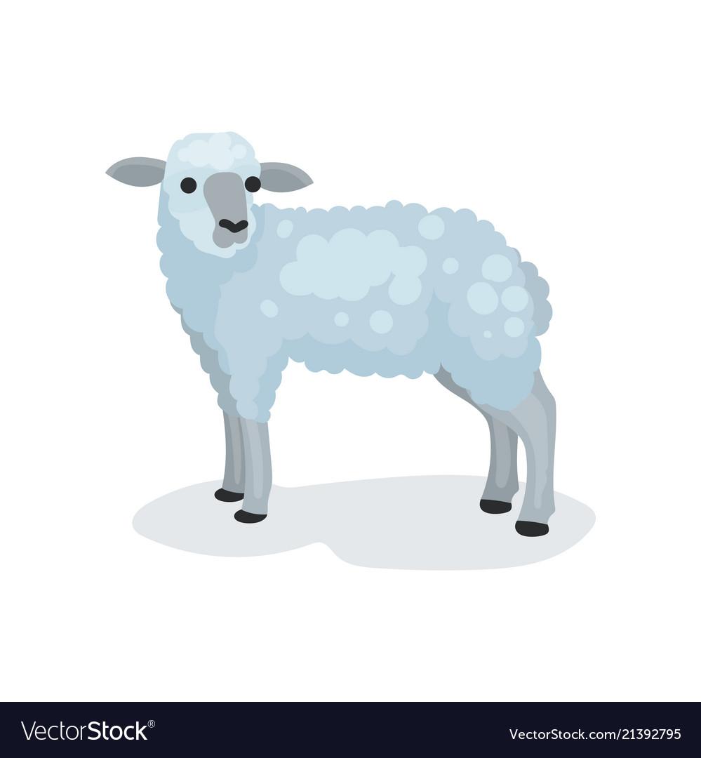 Flat icon of cute gray lamb small domestic