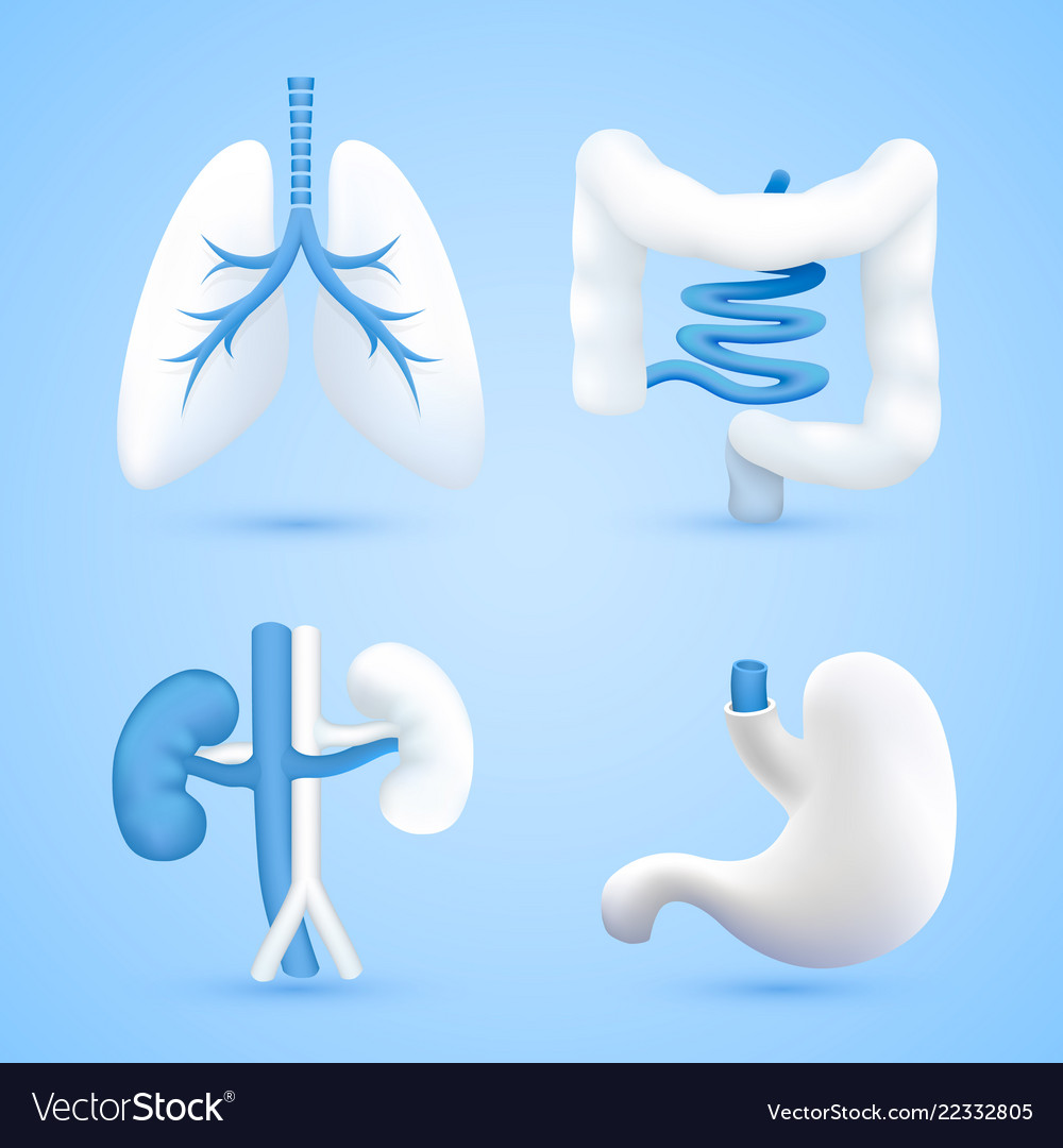 Human organs on a white background blue objects