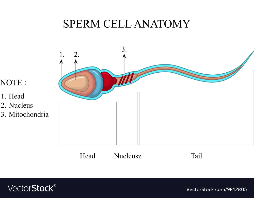 sperm-cells-in-cowpers-fluid-black-light-picture-light