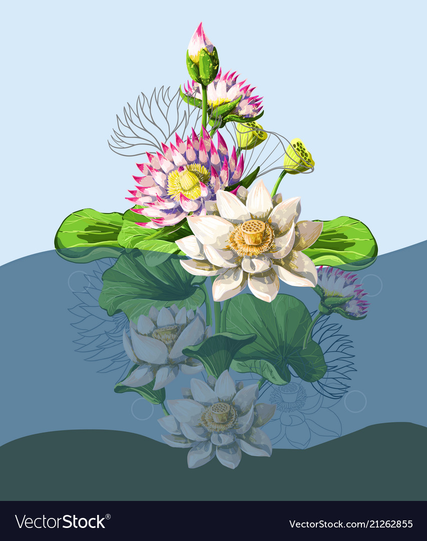 Bouquet waterlily hand draw in water vector