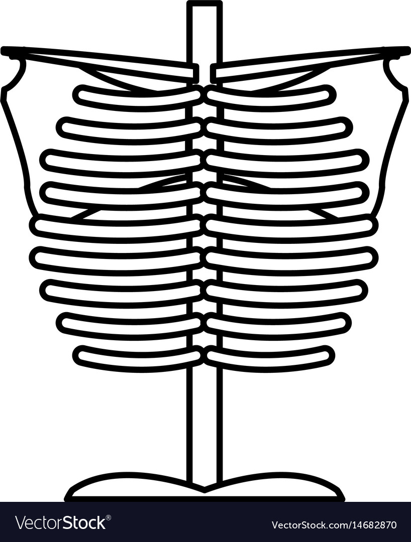 Bone chest anatomy body medical line vector image