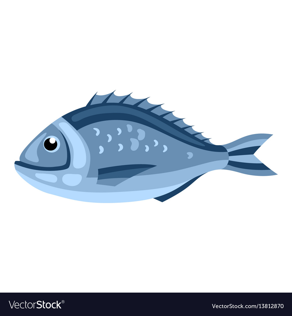 Dorada fish isolated of seafood on vector image