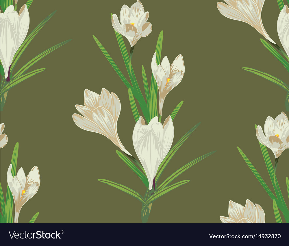 White crocus flowers royalty free vector image white crocus flowers vector image mightylinksfo