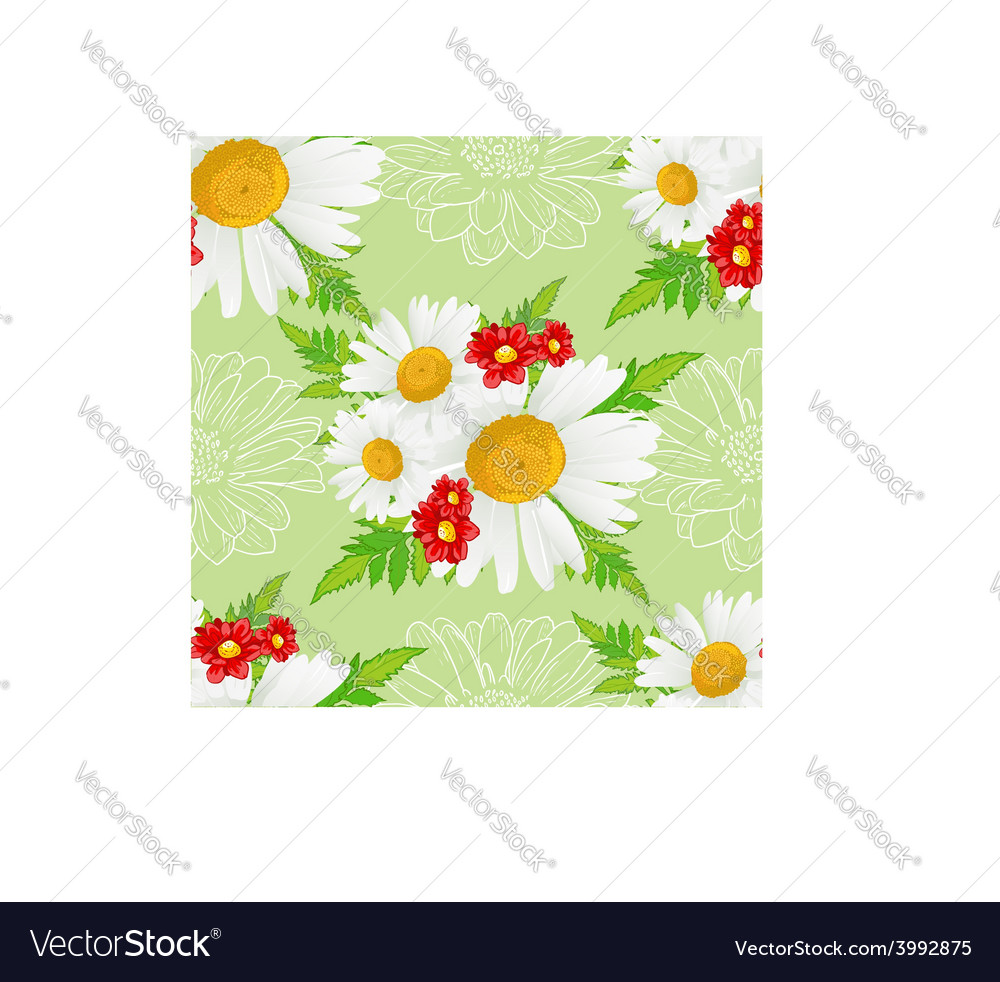 Floral seamless background with white chamomiles