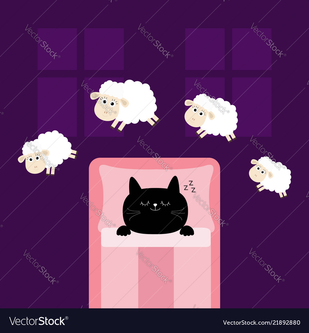 Cute sleeping cat kitten jumping sheeps cant