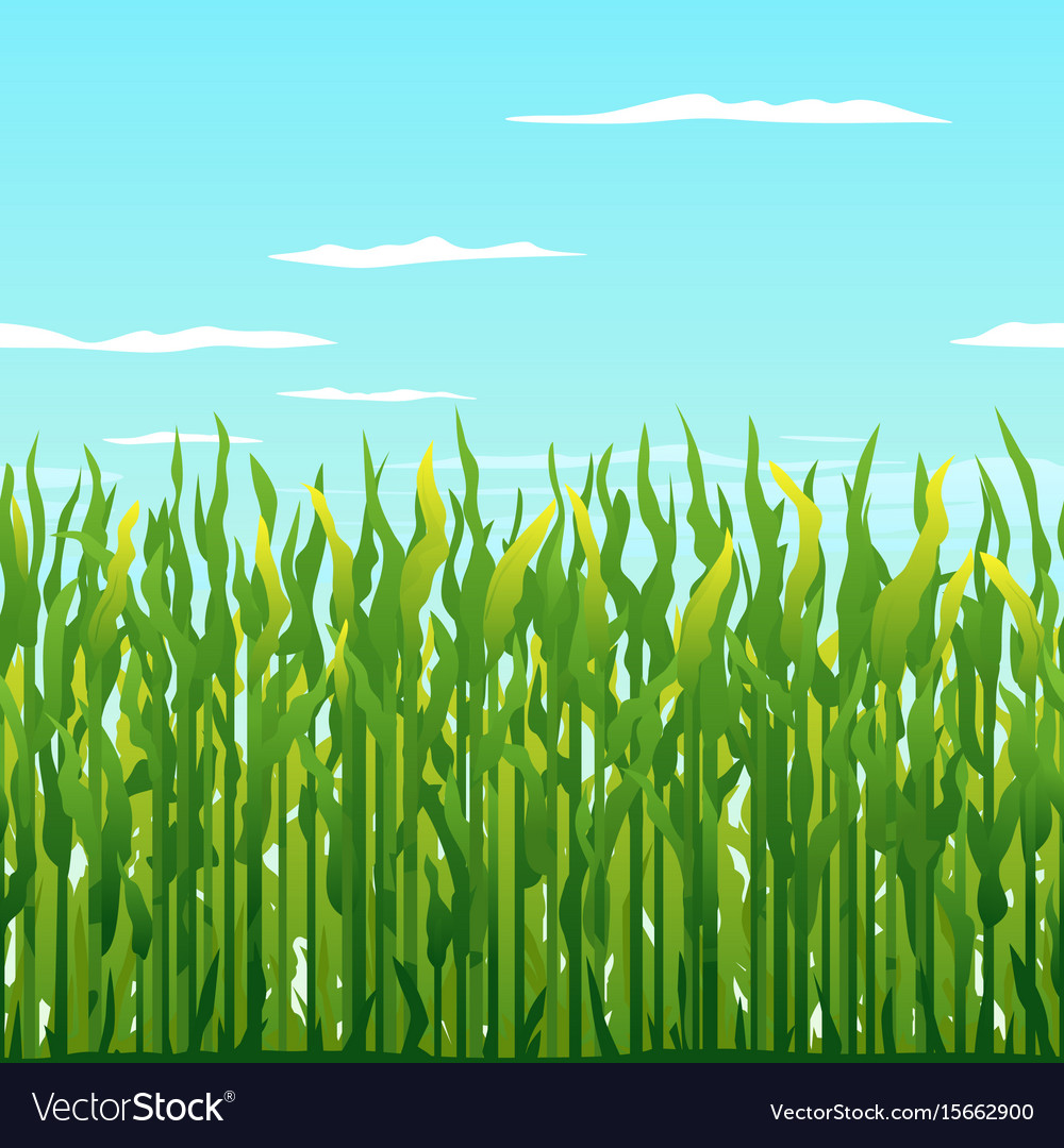 Green corn plants background vector image