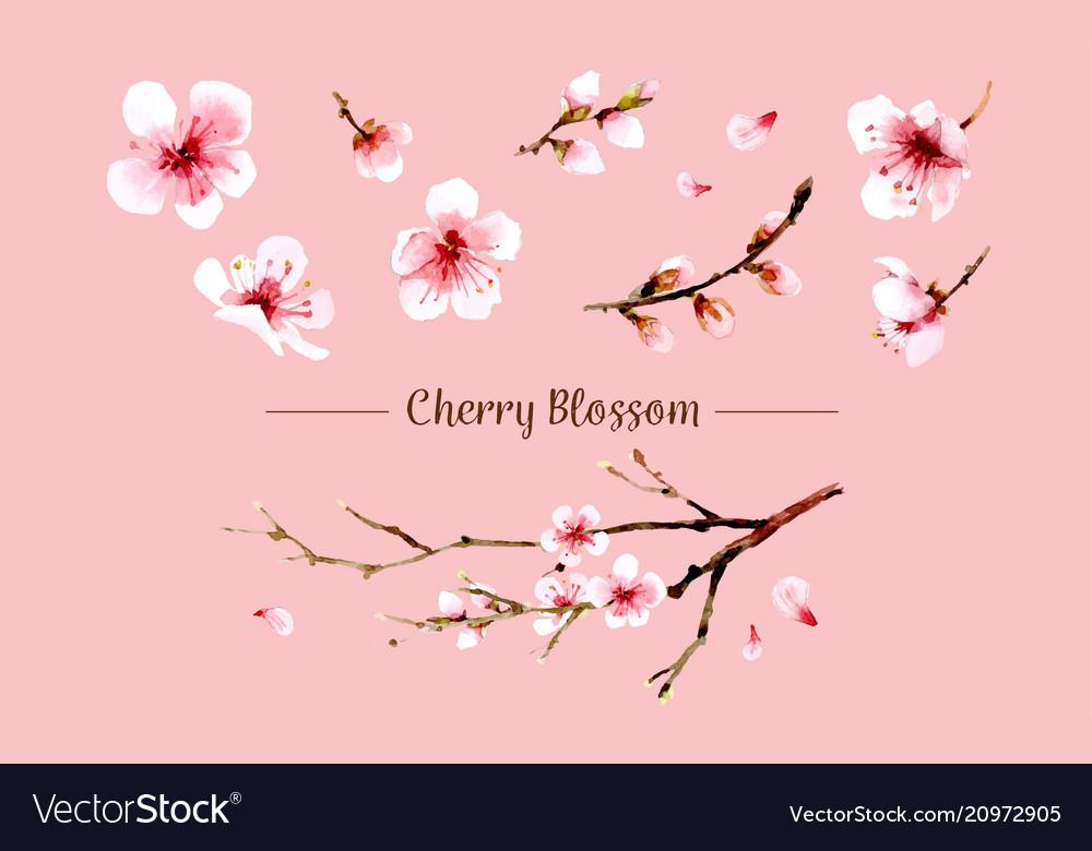 Sakura flower set sakura flower