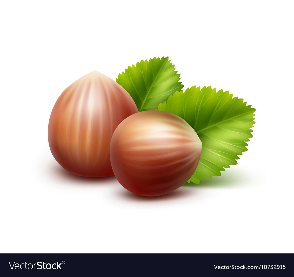 Full Unpeeled Hazelnuts with Leaves on Background