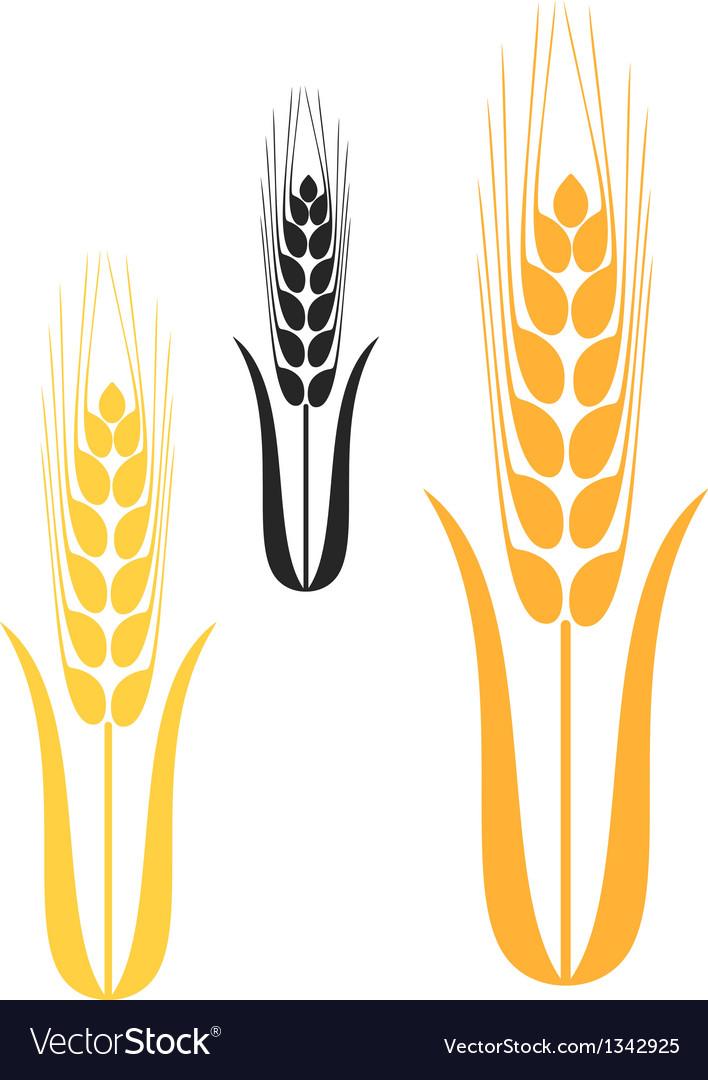 barley royalty free vector image vectorstock rh vectorstock com barley vector art wheat barley vector