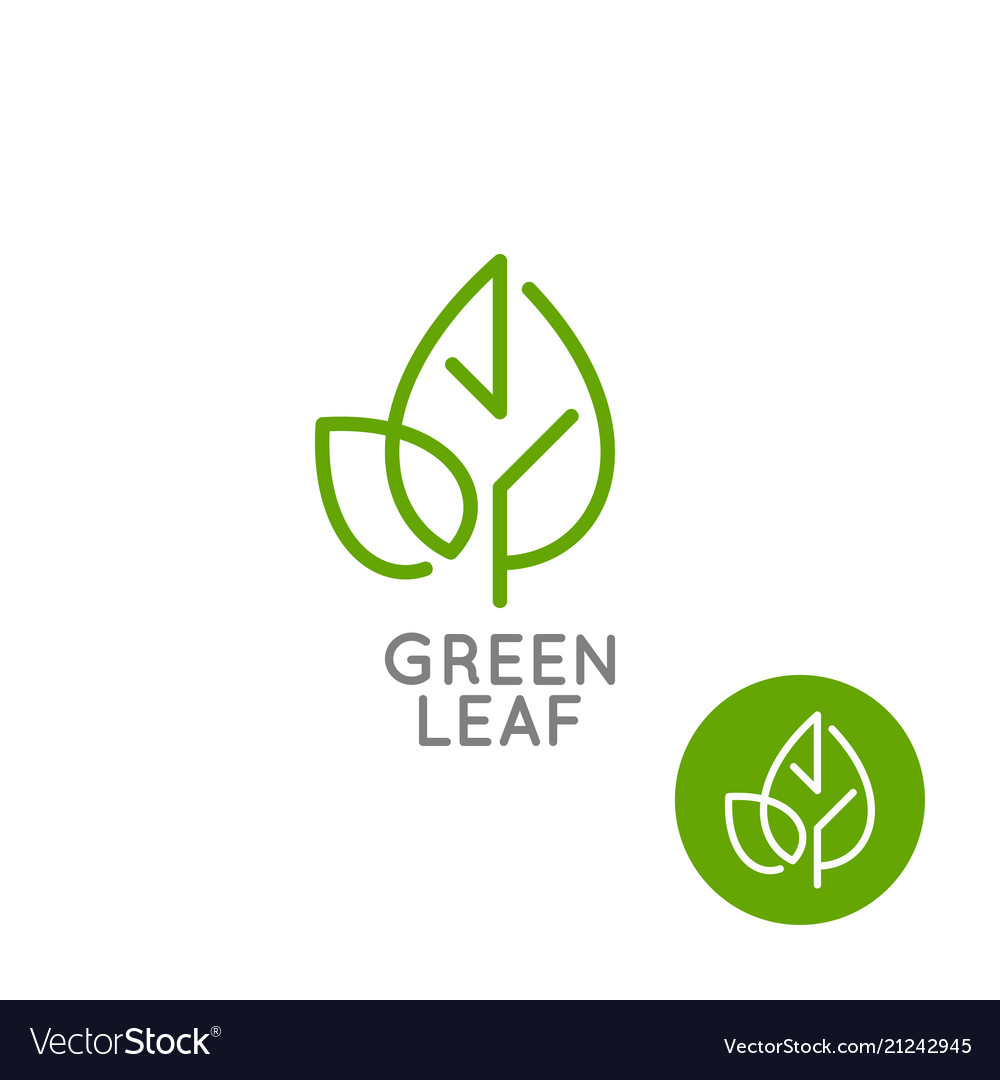 Leaf logo concept green leaf line on white